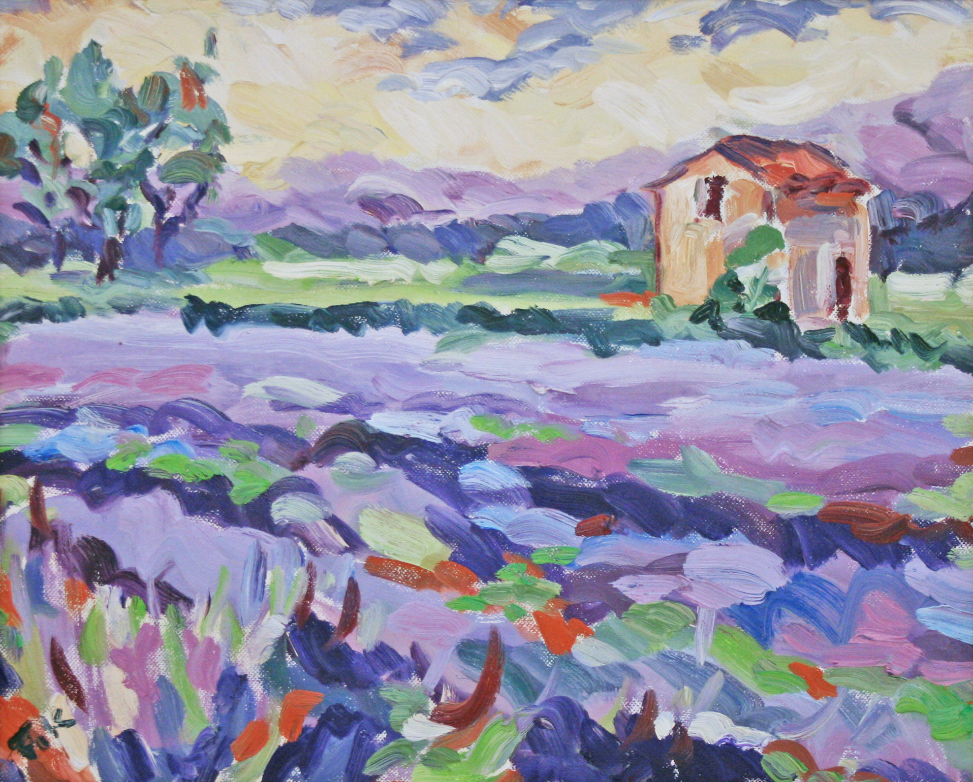 Luberon Lavender
